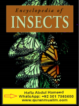 What is the comprehensive Encyclopedia of Insects ? comprehensive auto, fully comprehensive, comprehensive general liability, comprehensive dictionary