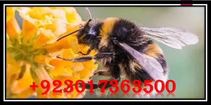 surah nahl, surah an nahl, surah al nahl, surah alnahl, quran 16:106, al nahl, quran 16, soorah ahn, surah nahl translation, quran chapter 16, surat an nahl, surat al nahl, quran surah 16, Quran Bees, surah nahl, quran bee, surah nahl meaning, the bee quran, surah nahl meaning, bees in the quran,