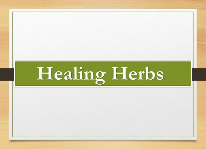 herbal for life, herbal mixes, heals all herb, strong sedative herbs, good health herbs, best herbs for women, natural herbs that get you high, spiritual herbs, herbs that get you high, herbal preparation, magic healing herbs, herbal picture, soothing herbs, herbs for good health, nature's medicine, holistic herbal solutions