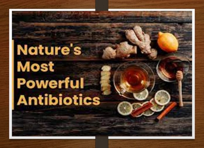 what is a good natural antibiotic, home remedy antibiotic, antimicrobial herb, antibiotic herbs, buhner herbs, substitute for penicillin, doxycycline natural alternative, amazon antibiotics, herbal antibiotics book, alternatives for penicillin